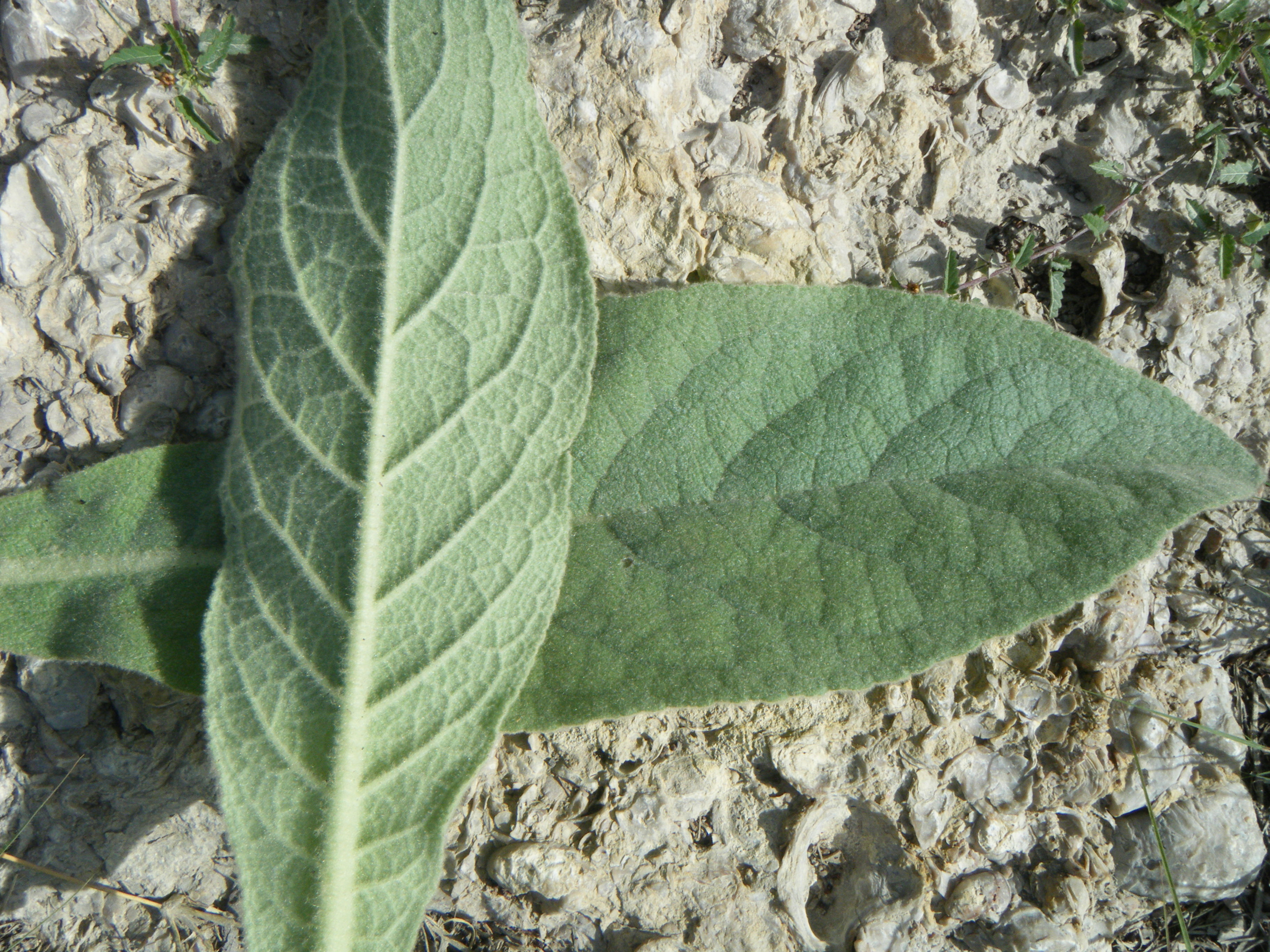 Life Lessons Learned from a Fuzzy Leaf